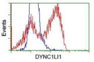 GTX84596 - DYNC1LI1