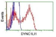 GTX84597 - DYNC1LI1