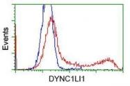 GTX84598 - DYNC1LI1