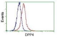 GTX84602 - CD26 / DPP4