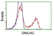 GTX84610 - DNAJA2