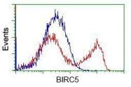 GTX84824 - IAP4 / BIRC5