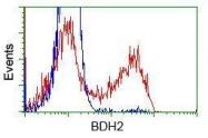 GTX84831 - BDH2