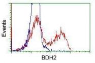 GTX84832 - BDH2