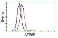 GTX84846 - ATP synthase subunit beta