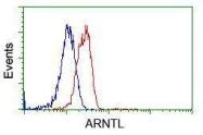 GTX84851 - ARNTL / BMAL1