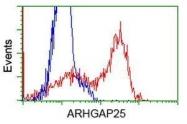 GTX84863 - ARHGAP25
