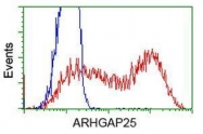 GTX84867 - ARHGAP25