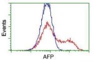 GTX84955 - Alpha-fetoprotein / AFP