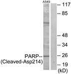 GTX86921 - PARP1