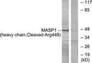 GTX86929 - MASP-1