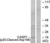 GTX86933 - Caspase-7