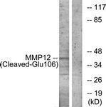 GTX86934 - MMP-12
