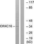 GTX86984 - Olfactory receptor 4C16