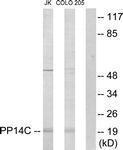 GTX87104 - PPP1R14C