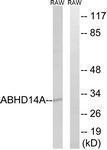 GTX87114 - ABHD14A