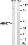 GTX87116 - Epoxide hydrolase 4 / EPHX4