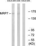 GTX87120 - ABCC10 /  MRP7