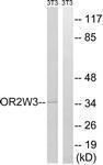 GTX87122 - Olfactory receptor 2W3