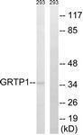 GTX87173 - GRTP1 / TBC1D6