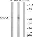 GTX87183 - ARMC6