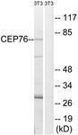GTX87193 - CEP76