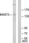 GTX87209 - MAST3