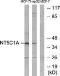 GTX87233 - NT5C1A