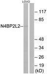 GTX87253 - N4BP2L2