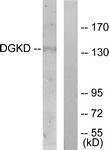 GTX87254 - DAG kinase delta
