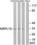 GTX87277 - MRPL15