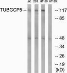 GTX87308 - TUBGCP5