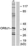 GTX87320 - Olfactory receptor 8J1