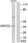 GTX87347 - Olfactory receptor 7C2