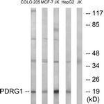 GTX87374 - PDRG1