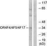 GTX87394 - Olfactory receptor 4F17