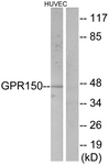 GTX87397 - GPR150