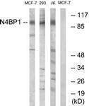 GTX87451 - N4BP1