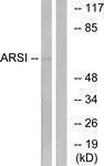 GTX87576 - Arylsulfatase I