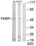 GTX87580 - Fukutin-related protein