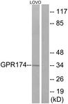 GTX87624 - GPR174