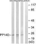 GTX87655 - PPP1R14D