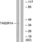 GTX87673 - TAS2R14