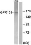 GTX87693 - GPR158