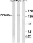 GTX87725 - PPP1R3A