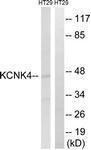 GTX87726 - KCNK4