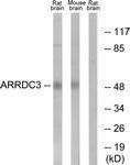 GTX87776 - ARRDC3