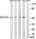 GTX87783 - CHRNA10