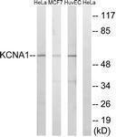 GTX87837 - KCNA1
