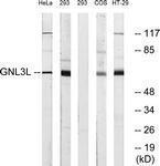 GTX87842 - GNL3L